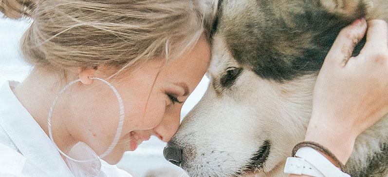 Perro aliviando su ansiedad por separación