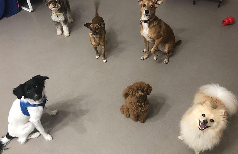 guarderia-canina-dia-txakur-etxea-16